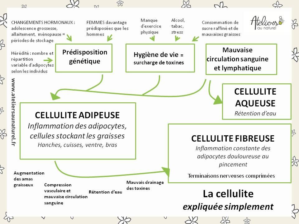 La cellulite expliquée simplement - Ateliers au naturel